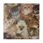 Kittens Tile