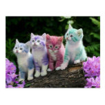 kittens with colour post card