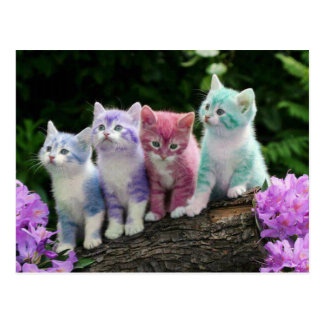 kittens with colour postcard