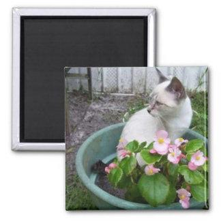Kittie and Flower Pot Magnet