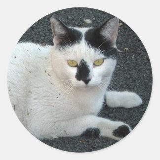 Kittie de B W Pegatina