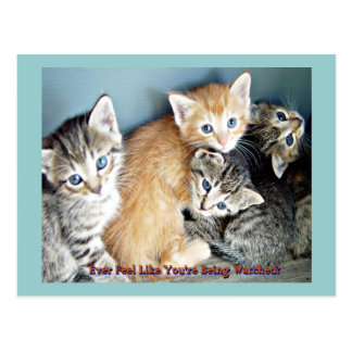 Kittie Fun Postcard