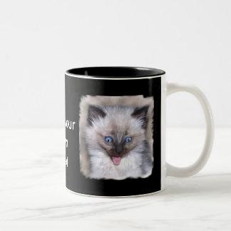 Kittien siamés con la lengua hacia fuera asalta taza de café