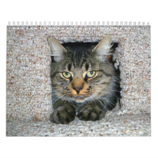Kitties Calendar