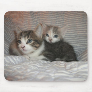 Kitties Chilaxin Mouse Pad