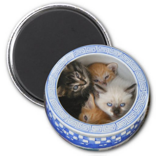 Kitties in a Planter 2 Inch Round Magnet