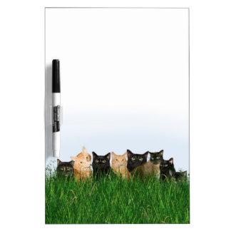 Kitties in grass Dry-Erase whiteboards