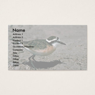 Kittlitz's Plover Business Card
