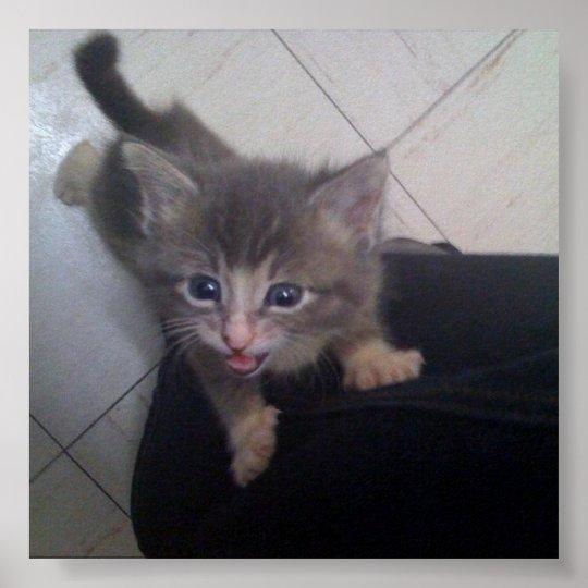 kittty poster