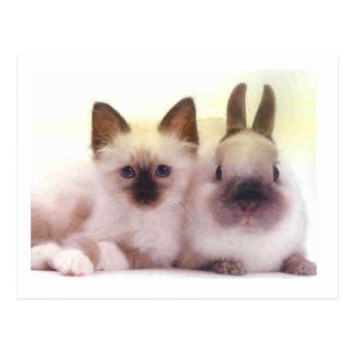 Kitty And Bunny Products Postcard