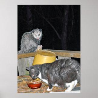 Kitty and Possum Poster