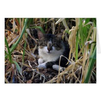 Kitty Blank Greeting Card