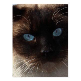Kitty Blue Eyes Postcard