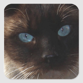 Kitty Blue Eyes Stickers