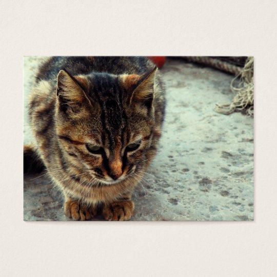 Kitty Business Card
