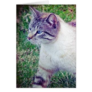 Kitty Card