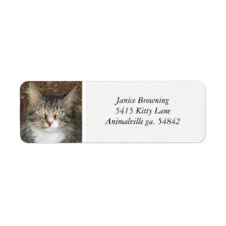 Kitty Cat Address Label