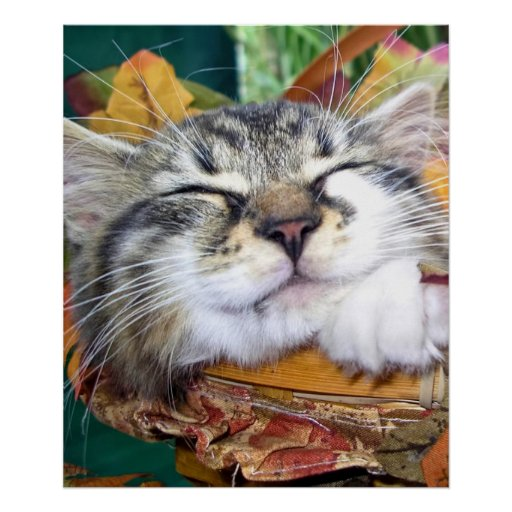 Kitty Cat Face, Fun Maine Coon Kitten,Thanksgiving Posters