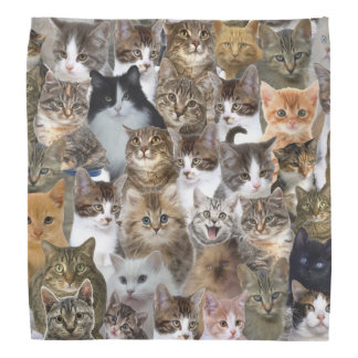 Kitty Cat Faces Pattern Bandana