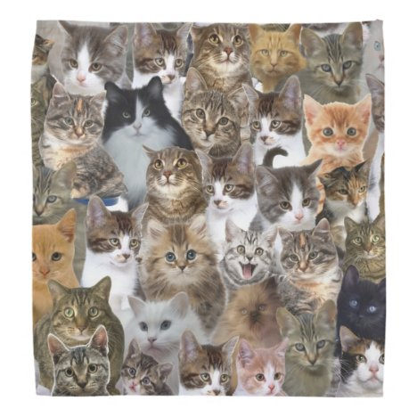 Kitty Cat Faces Pattern Bandana