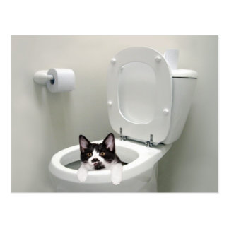 Kitty cat in toilet bowl postcard
