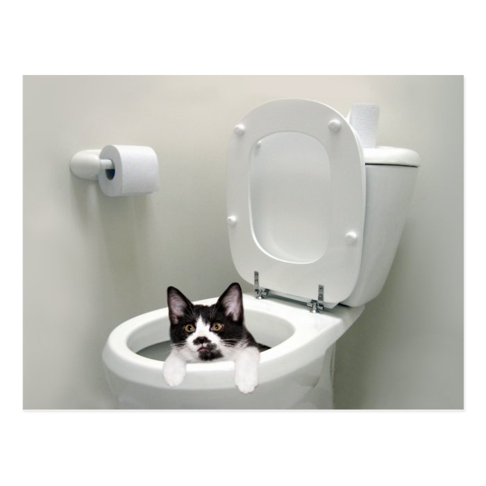 Kitty cat in toilet bowl postcard zazzle for Commode kitty