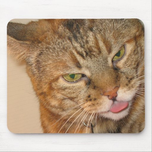 kitty cat kisses mouse pads