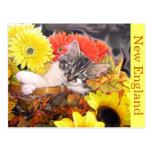Kitty Cat Kitten leaning, Paws Crossed, Basket Postcard