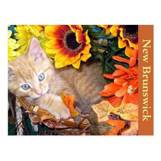 Kitty Cat Kitten Om Nom Nom,  Postcard