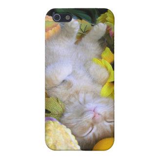 Kitty Cat Kitten, Pumpkin, Squash, Gourds iPhone SE/5/5s Case