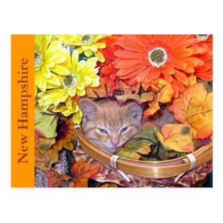 Kitty Cat Kitten, Still Life, Gerbera Daisy Basket Postcard
