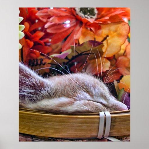 Kitty Cat Kitten's Profile, Tabby Sleeping, Basket Posters