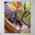 Kitty Cat Look, Cute Thanksgiving Kitten, Autumn Poster