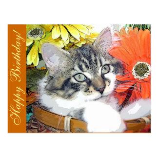 Kitty Cat Look, Halloween Kitten, Gerbera Daisies Postcard