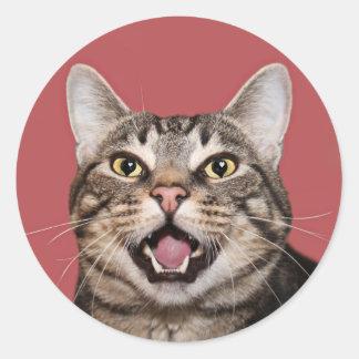 Kitty cat love classic round sticker