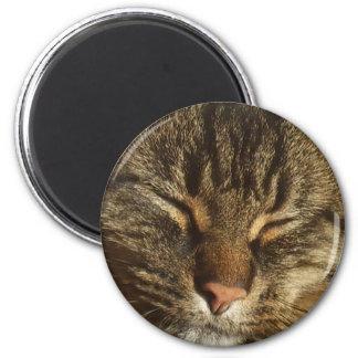 Kitty Cat Magnet