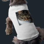 "Kitty Cat Pet Clothing<br><div class=""desc"">Kitty Cat Pet Clothing</div>"