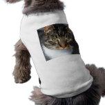 Kitty Cat Pet Clothing<br><div class='desc'>Kitty Cat Pet Clothing</div>