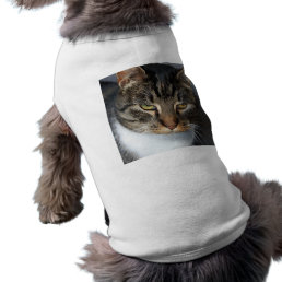 Kitty Cat Pet Clothing