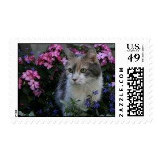 Kitty Cat Postage