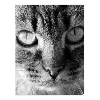 Kitty Cat Postcard
