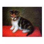 Kitty Cat Postcard:  Kitten by George Stubbs