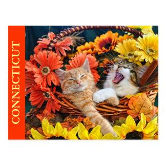 Kitty Cat Roaring, Kittens in Love, Flower Basket Postcard