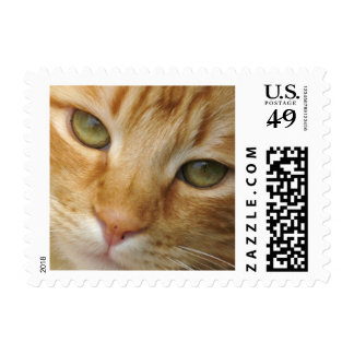 Kitty Cat Stamp