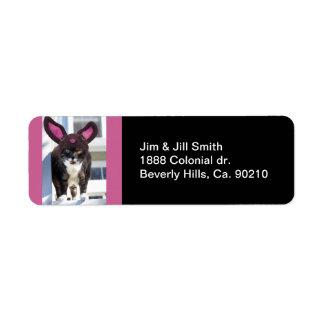 Kitty Cat Wearing Bunny Ears Label