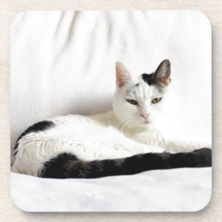 Kitty Cat, White and Black Cat Relaxing Coaster
