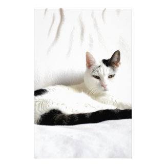 Kitty Cat, White and Black Cat Relaxing Stationery