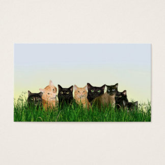 Kitty cats in the grass business card