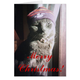 Kitty Christmas Card