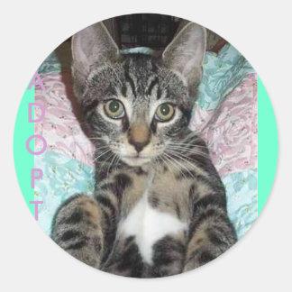 Kitty Cutie Sticker